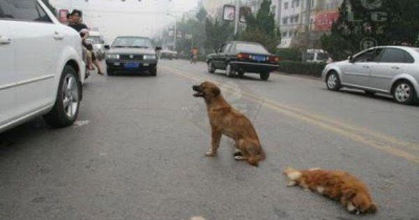 Pin On Dogs A Man S Best Friend