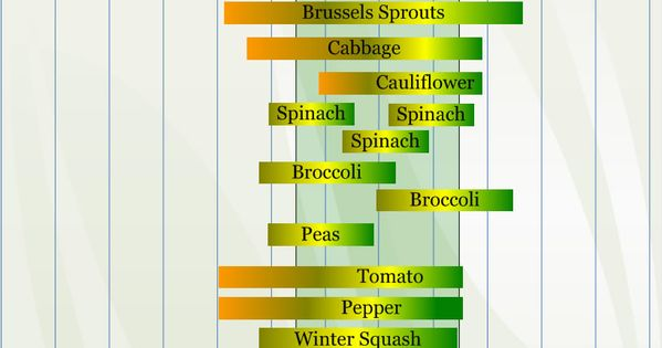 zone 4 vegetable planting calendar describing approximate dates to start vegetable plants