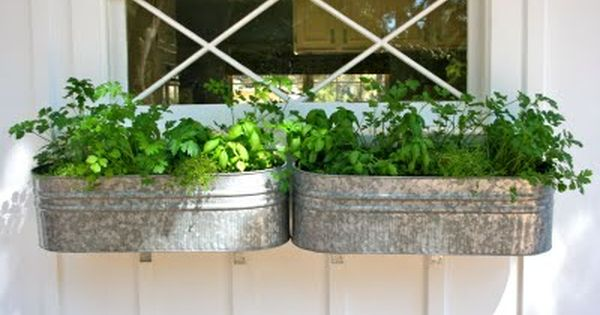 Herb window boxes in galvanized buckets. This would be great outside a