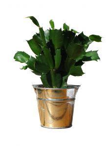 Using Epsom Salt For Beautiful House Plants Homemade Plant