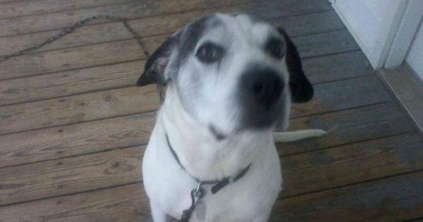 Rip Bolo Coonhound Dog Nc To Mi Usa Adopt Pets Cats