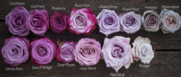 The Lavender Purple Rose Study Purple Roses Lavender Roses Purple Flowers