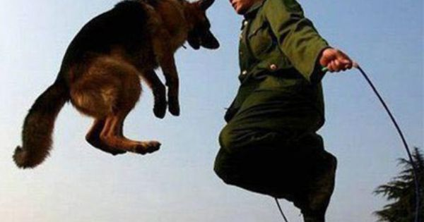 How To Train A Dog To Jump Rope Not Hard If You Have