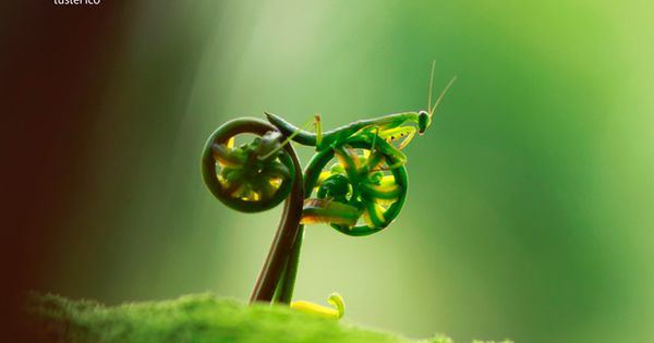 50 perfectly timed photos. Praying mantis on a fiddlehead fern