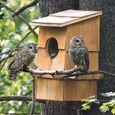 Image Result For How To Build Owl Nesting Box Bird Houses Bird House Feeder Bird House Plans