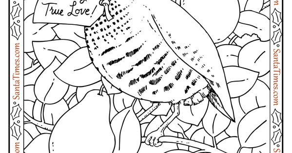 Partridge In A Pear Tree Coloring Page This And Many More