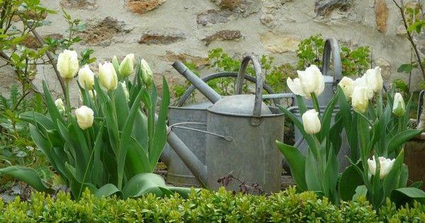 Spring tulips...