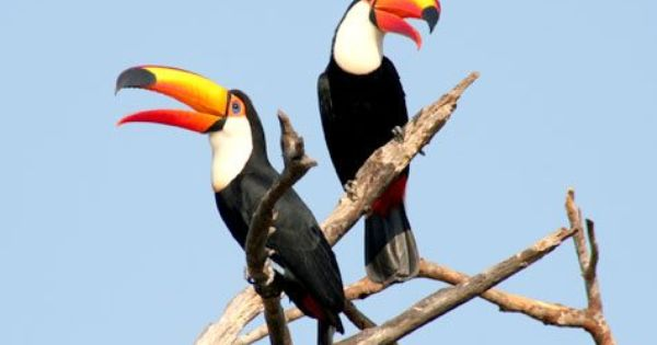 Bonito Nos Limites Do Pantanal Matogrossense Esta Imersa Na Mata Virgem Onde Os Turistas Podem Conviver Com Os Anim Pantanal Matogrossense Pantanal Animais