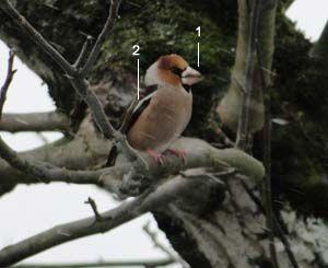 Epingle Sur Oiseaux