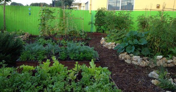 Edible Landscaping For Florida Victory Garden