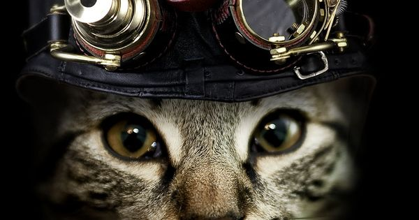 Steam Punk Kitty.