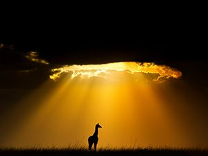 Free Wallpaper Backgrounds For Your Computer World Wildlife Fund