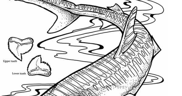 Welcome To Dover Publications Sharks To Quill Fish
