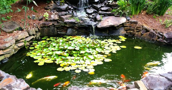 How to make a beautiful goldfish pond estanques for Goldfish en estanque