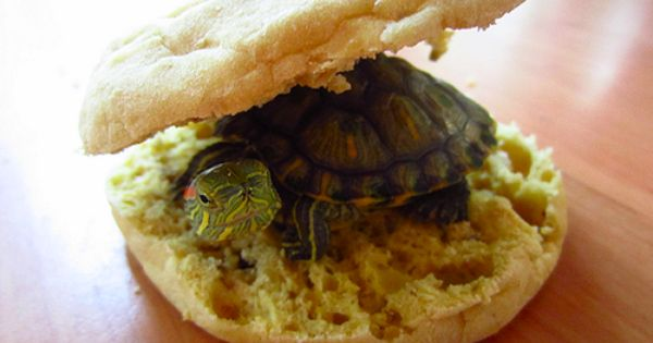 this is my littlest turtle turtles pinterest turtle