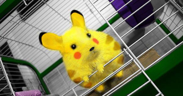 Pikachu Pikachu Pikachu Mascot Costume Pikachu Costume