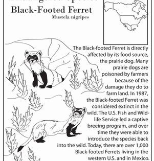 Endangered Species Worksheet Endangered Species Worksheet