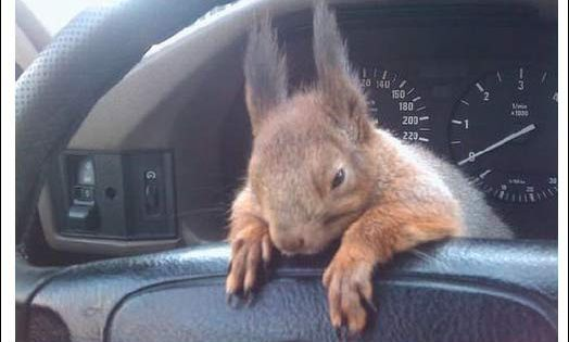 Soldier rescued baby squirrel and now they are best pals! That's cute!