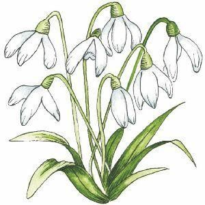 Snowdrops Rubber Stamp 21458 0 1267462796000 Jpg 300 300 Silk Ribbon Embroidery Patterns Silk Ribbon Embroidery Embroidery Stitches Flowers