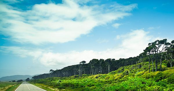 road on NZ's West Coast // South Island, New Zealand