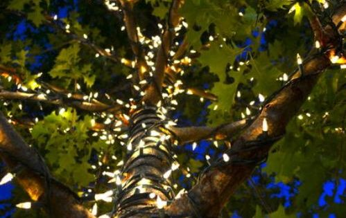 Sunday brunch (57 photos) Gardens, Lights in trees and Enchanted forest party