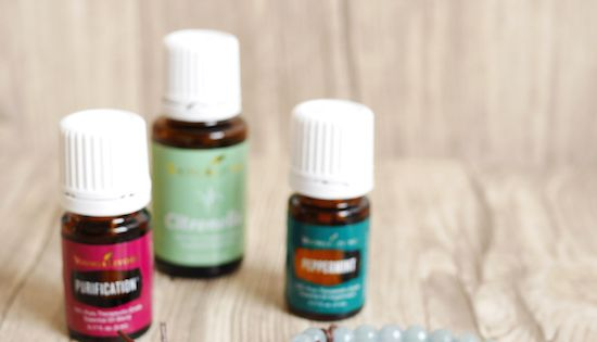Deter Bugs Naturally With This Simple And Beautiful Diy