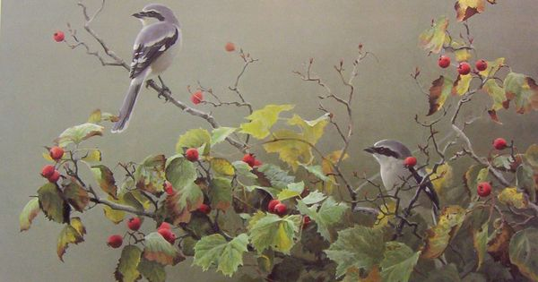 Robert Bateman Shrike Pair and Hawthorn | ARTIST • Robert ...