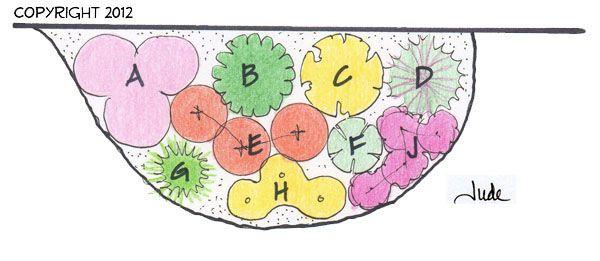 Pin on Shrunken Garden Zone Perennial Garden Design on zone 6 sun garden designs, zone 6 landscape designs, zone 6 flower designs,
