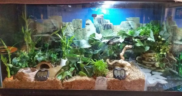 My Snake Terrarium With Waterfall And Live Plants For My