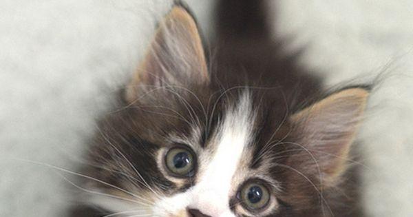 Cat - DSC_0685