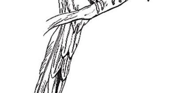 Quetzal Birds Pictures