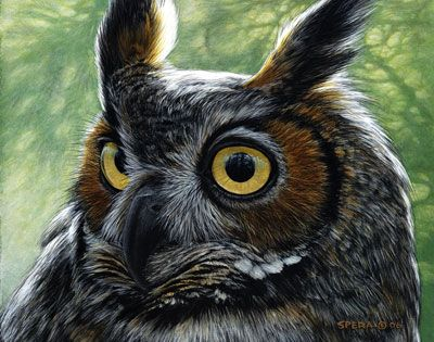 Edward spera acrylics big horned owl animals birds for Owl fish store