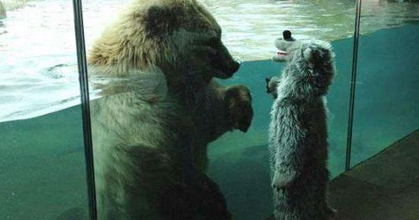 Just died. polarbear kids
