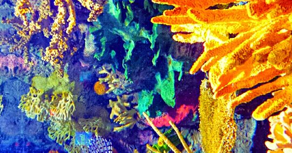 Nature paints the most beautiful masterpieces: vibrantly colorful underwater Coral reefs with