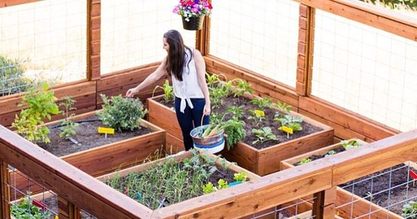Brit from @britandco here! Creating an edible garden in my backyard