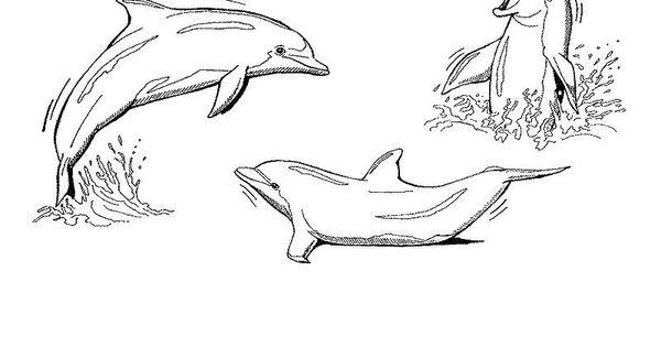 delphin malvorlage  ausmalbilder für kinder …  pinteres…