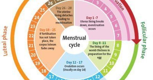 Girl Menstrual Cycle Photo
