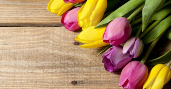 Imagenes de tulipanes para fondo de pantalla