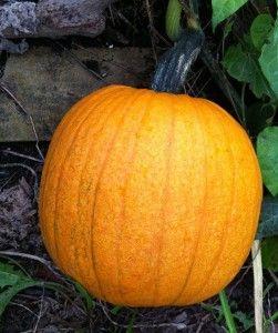 Seeds Raw Or Puree Then Frozen Some Recipes Frozen Pumpkin Pumpkin Dishes Pumpkin