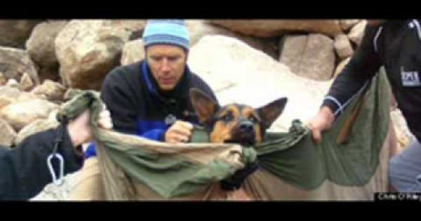 Watch Miracle Dog Missy Rescued From 14 000 Ft Colorado Peak By Team Of Heroic Strangers Rescue Dogs Rescue Dogs