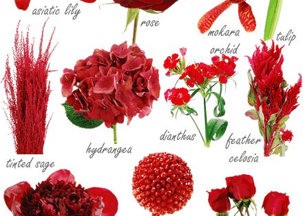 Red wedding flowers a?? did you know there were so many? on http://www.bellaweddingflowers.com/blog