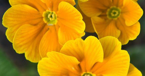 Flower Baskets Dublin : Gorgeous pansies blessington street basin phibsborough