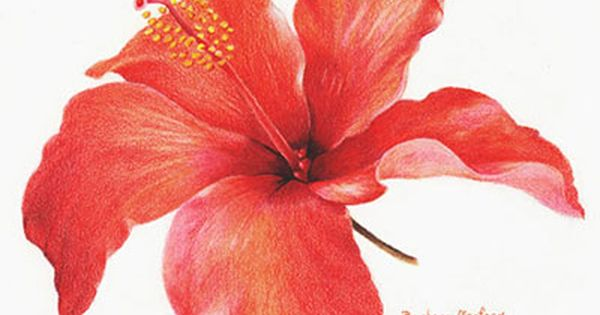 Barbara Baniuk Botanical Art Art Society Flower Painting
