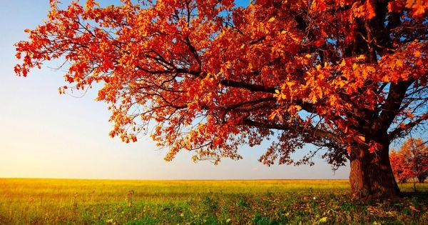 High Resolution Nature Desktop Hd Wallpaper Widescreen Free Fall