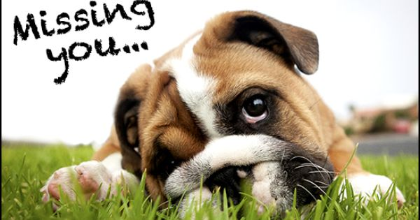 Miss You Cute Puppy Names Cute Dogs Pets