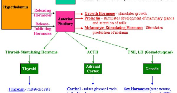 Endocrine system nursing pinterest exocrine gland endocrine