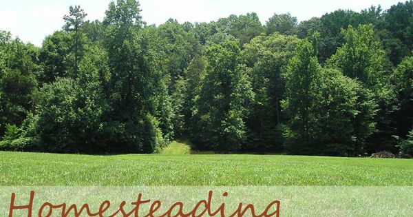 FOUR things you absolutely must have when homesteading on a budget. You