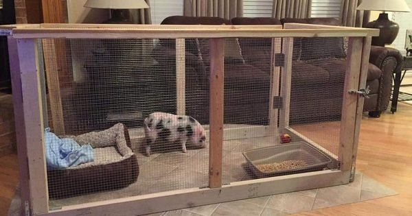 Mini pig indoor housing this would definitely be good for - Pot belly pigs as indoor pets ...