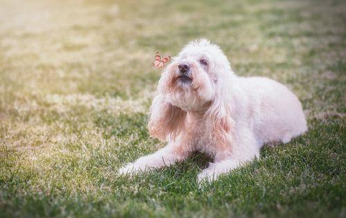 Paul Tadday Photography Melbourne Pet Portraits Dog Amp Cat