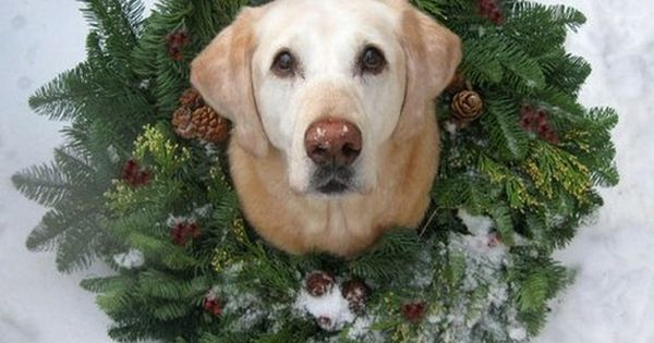 so cute for a Christmas card - Christmas photo ideas